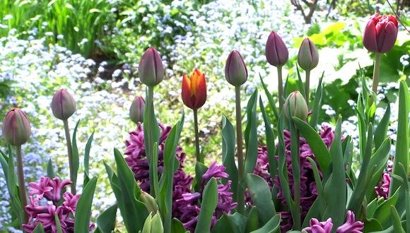 Spring bulbs brightling garden designs for Spring bulb garden designs