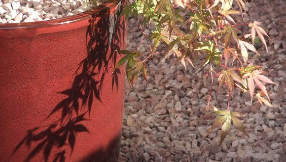 a6-small-front-garden-design