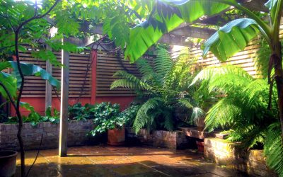 A tropical haven in North London